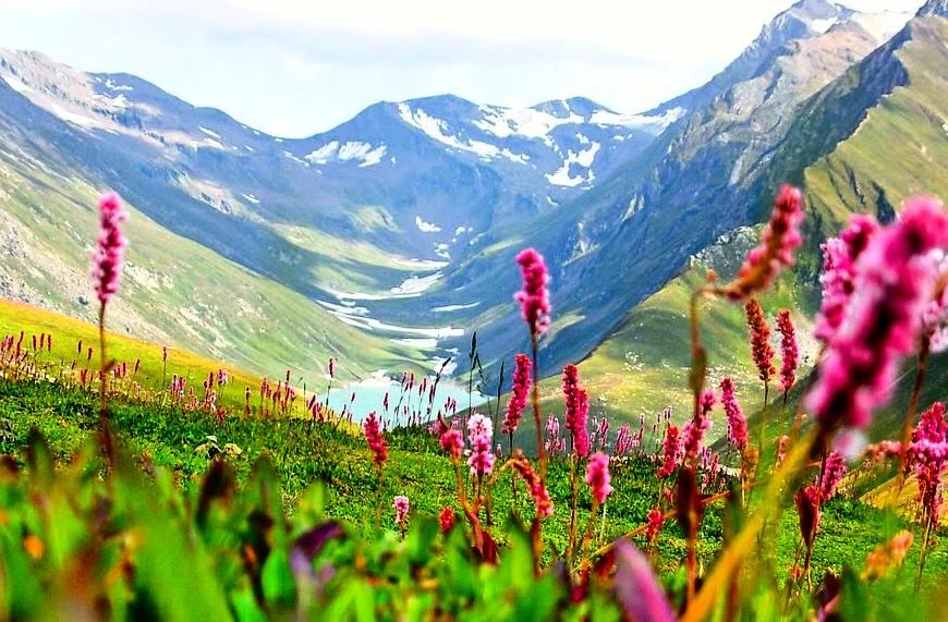 Valley Of Flowers – Rich In Flora And Fauna