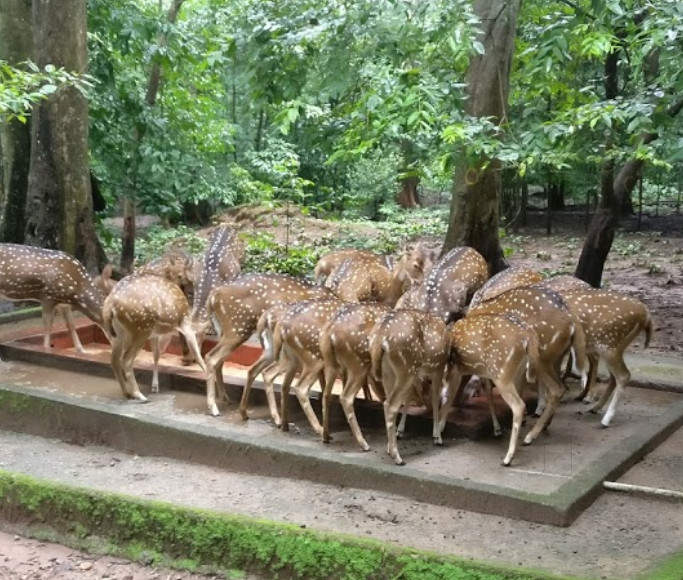Thenmala Deer Park: For Flora And Fauna