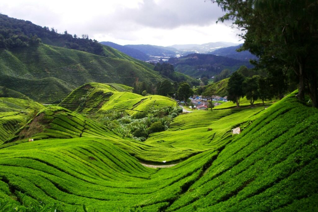 High Fields Tea Factory – Explore & Learn