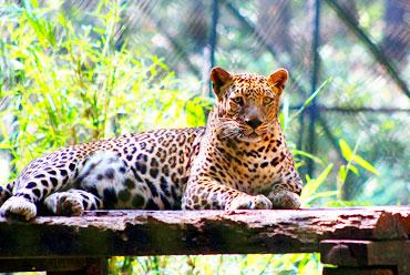 Bondla Wildlife Sanctuary: Smallest Wildlife Sanctuaries In Goa