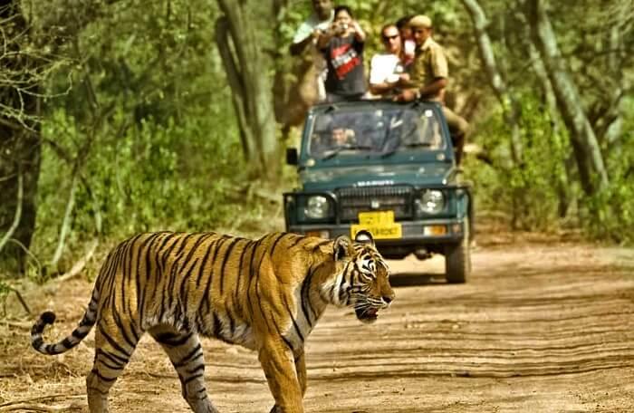 Bhagwan Mahavir Wildlife Sanctuary: Largest Wildlife Sanctuaries In Goa