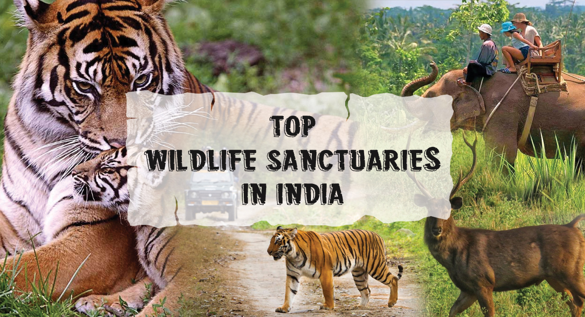 15 Best Wildlife Sanctuaries In India For Your Next Safari