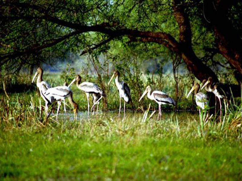Mangalavanam Bird Sanctuary – Watch Birds Flying