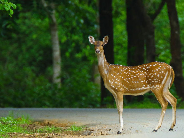 Dandeli Wildlife Sanctuary, Karnataka