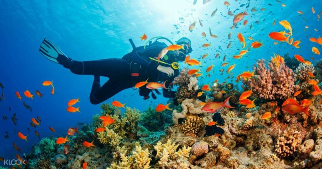 Tarkarli in Maharashtra - Enjoy the colorful coral