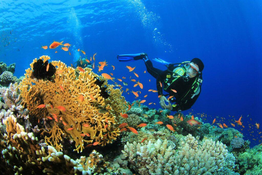 Lakshadweep - Underwater Delight