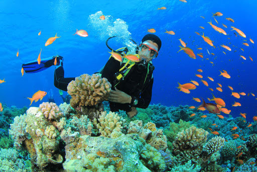 Scuba Diving In India: Explore The Breathtaking Underwater Universe At The 10 Best Spots In 2021