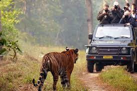 4. Jungle Safari Madhya Pradesh